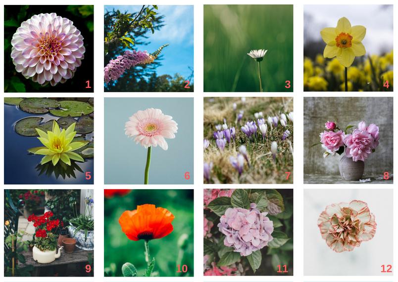 Blumen%20Collage